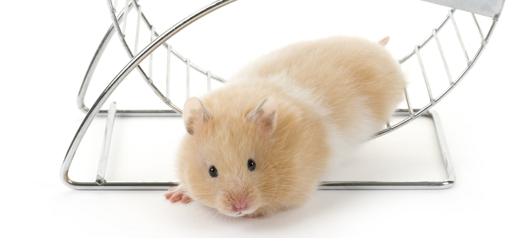 Don't trip over the hamster wheel on the way out